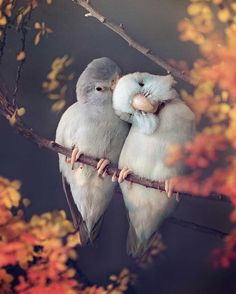 Soft Colors, Pastel Colors, Types Of Insects, Dark Thoughts, Parrot Bird, Romantic Photos, Types Of Photography, Creative Artwork, Budgies