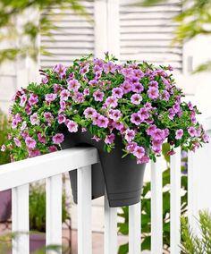 Blühende Pflanzen-Töpfe Balkon-Geländer dekorieren