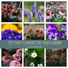 Pet Safe Flowers for Your Garden - Leaf and Paw