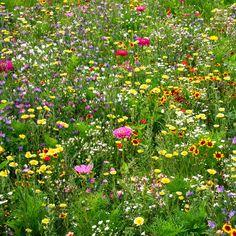 tolles winterfeste gartenblumen die die kalte gut uberstehen eben bild oder cccddceffda