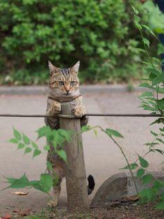Guarding my post...