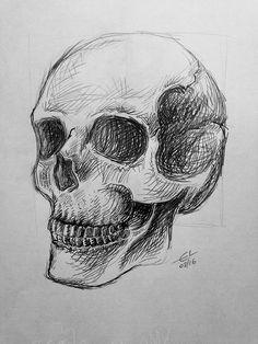 Skull - Pencil drawing