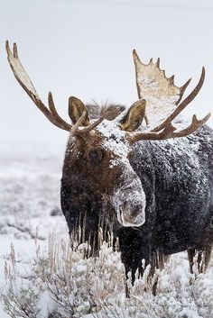 Snow days.  (Also, I think seeing a moose would be the coolest thing ever.)