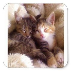 $5.95 · This set of sleeping kitten stickers are the perfect addition to any notebook, letter or package.