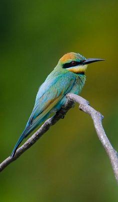 bird wintering ranges