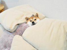 """柴犬店長が癒やしの接客!東京都渋谷区にある話題の""""柴犬バー""""はカクテルも本格的だった"""