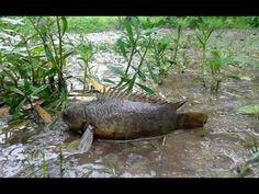 Xem mùa bắt cá ở rừng U Minh Cà Mau