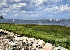 Harbor from Stephen's Field in Plymouth, MA - Janice Drew