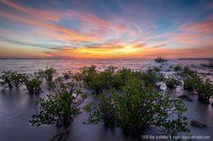 Mangroves At Sunset, Mindil Beach, Darwin, NT, Australia