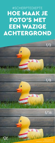 Fotografie tip voor beginners: uitleg over scherptediepte. Hoe maak je een foto … Photography tip for beginners: explanation about depth of field. How do you take a photo with a blurred background?