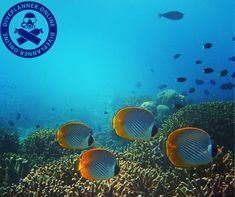 Marine wildlife has sustained human civilizations for thousands of years, providing food; materials for construction; and enriching lives recreationally.online and Plan your first dive. Scuba Diving, Civilization, Sustainability, Wildlife, Construction, How To Plan, Food, Diving, Building