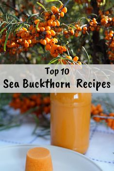 Sea Buckthorn Berries are a powerhouse of Vitamin A & C. I have compiled Top 10 Sea Buckthorn Recipes to preserve these berries to tap into this superfood. Jelly Recipes, Pureed Food Recipes, Jam Recipes, Cooking Recipes, Sea Buckthorn Tea, Sea Berries, Rainbow Food, Jam And Jelly