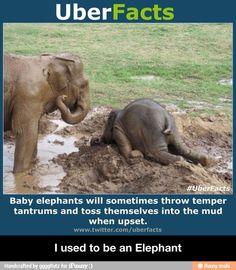 I used to be an Elephant / iFunny :)