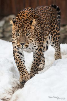 Sri Lanka Leopard by CROW1973, via Flickr