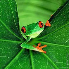 SEE Costa Rica :: benefits wildlife conservation :: www.seethewild.org