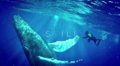 FREEDIVING VIDEO  EVEN YOU AFRAID OF WATER : THIS GORGEOUS FREEDIVING VIDEO WILL TAKE YOUR BREATH AWAY