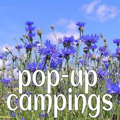 trend: pop up campings #leukmetkids #kamperen #nederland
