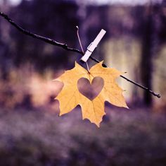 """Love it...or """"leaf it"""". Sorry, I know that was corny, be""""leaves"""" me! :) - RLH"""