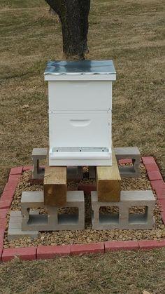 Beekeeping For Beginners - Survival Mom