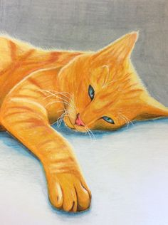 Cat in coloured pencil by Nicole Bueckert.