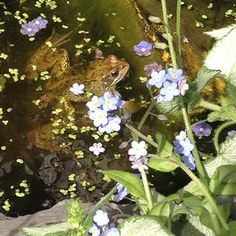 Happy inhabitant of our plastic storage box mini pond #kids #gardening  #wildlife