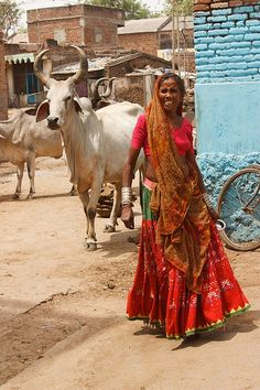 Rajastan   Rajasthan. Cows roam freely ~Repinned Via Aini Arif