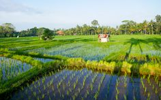 Jatiluwih - Reisterrassen auf Bali © Gudrun Krinzinger Best Of Bali, Hotels, Strand, Vineyard, Golf Courses, Outdoor, Last Minute Vacation, Bali Holiday Deals, Exotic