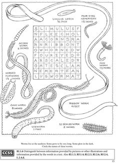 Welcome to Dover Publications  BOOST Seashore Activity Book
