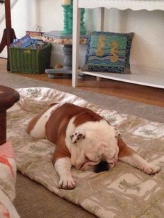 "❤ ""Face down tired"" ❤ Posted on Baggy Bulldogs"