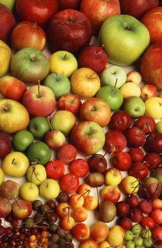 """Tutti siamo cresciuti con il famoso proverbio """"Una mela al giorno leva il medico di torno"""", ma pochi sanno che la mela è un vero e proprio farmaco fornito dalla natura, un prezioso alleato nella prevenzione di patologie e disturbi. Scopriamo insieme quali sono le sue proprietà benefiche..."""