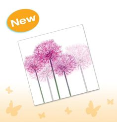 Allium card. Available from www.joscards.co.uk