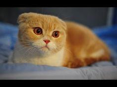 gatos engraçados - Pesquisa Google
