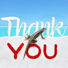 We at West Wind Inn want to express our appreciation to all of our guests and the amazing staff who ensure that each visit to our #Sanibel Island resort is as enjoyable as the last. #Thank you. #LoveFL #Sanibel #Island #Florida