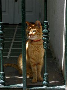 Liz - Orange tabby cat