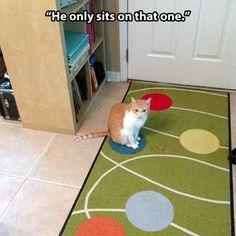 Funny Animal Pictures - View our collection of cute and funny pet videos and pics. New funny animal pictures and videos submitted daily. Animal Memes, Funny Animals, Cute Animals, Animal Captions, Animal Funnies, Crazy Cat Lady, Crazy Cats, I Love Cats, Cute Cats