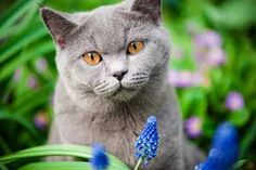 Beware of poisonous plants to Cats. Here's a list with pictures. Also has links to poisonous plants to dogs and children.