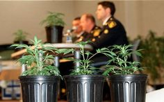 "DEA Admissions About Marijuana: 2014 DEA report said ""although some states have legalized the sale of marijuana, there will continue to be a ""black market"" in these states due to high taxes and state-imposed restrictions."" DEA explained ""grows on private lands require prosecutors and judges to approve search warrants; this is a difficult task in areas where state marijuana laws have changed."" 