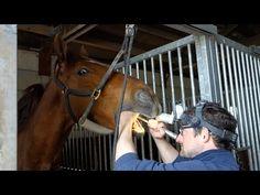 Vlog #46 De paardentandarts - YouTube