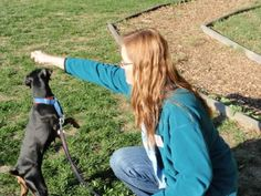 Play with Your Dog - Whole Dog Journal