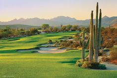 We-Ko-Pa Golf Club. #wekopa #golf #scottsdale