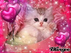 blingee | Ma création blingee - chaton