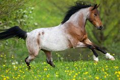Horse World Journal - All About Racing All The Pretty Horses, Beautiful Horses, Animals Beautiful, Animals And Pets, Cute Animals, Majestic Horse, Horse World, Horse Pictures, Horse Photography