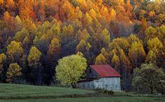 Colorful trees at Shenandoah Valley, USA