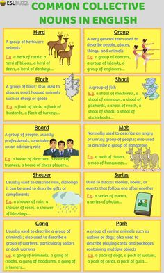 Common Collective Nouns in English
