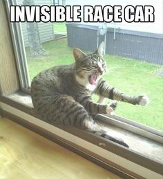 Funny Animal Quotes 212091463677982790 - Funny Cats : 16 Funny Cat Photos with Caption Like this. Source by lpfilipine Funny Animal Jokes, Funny Cat Memes, Cute Funny Animals, Cute Baby Animals, Funny Dogs, Cute Cats, Funny Cute, Funny Humor, Hilarious Quotes