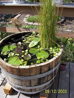 A container pond to host fish and frogs; I want to make one with Emma to add to the garden!
