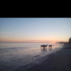 Horseback riding during sunset in Rocky Point, Mexico - ONE OF THE BEST MEMORIES EVER