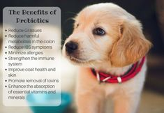Probiotics are easy to dispense and offer dogs, pets, and humans alike many health benefits and relief from chronic illness. Probiotics For Dogs, Ibs Symptoms, Dog Diet, Dog Itching, Paw Prints, Yorkies, Chronic Illness, Immune System, Allergies