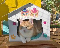 Notre princesse qui profite du soleil dans sa cabane. cabane chat éco-responsable en carton personnalisée avec des stickers. Toy Chest, Storage Chest, Stickers, Toys, Animals, Home Decor, Cabins, Princess, Sun