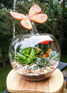 Succulent floratium / mini garden in an apple shaped glass vase :) decorated with a butterfly and stones Www.facebook.com/florarium.tallinn